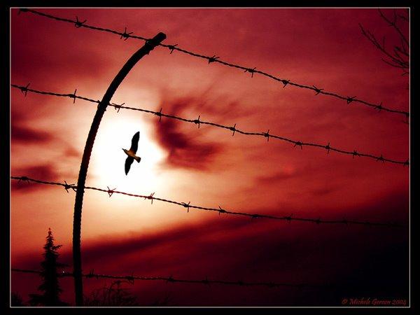 Αποφυλακίζεται ο απεργός πείνας και δίψας Νίκος Κουνταρδάς